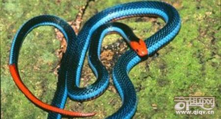 世界上十大最美的蛇,我被最后一个吓尿了