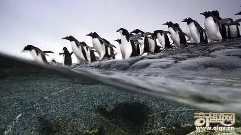 神秘又壮观的生命迁徙!太震撼!