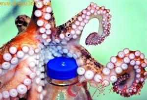 研究称章鱼有两个记忆系统智商如2岁幼童
