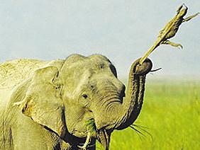 印公园大象把蜥蜴当溜溜球玩随身携带数日