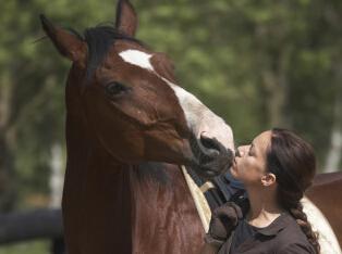 盘点各国夫妻奇葩离婚理由:妻子和马接吻