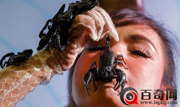 泰国蝎子女王表演嘴含活蝎 还让蝎子在身上爬行