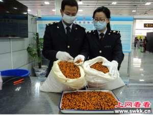 万元鹤望兰种子在福田口岸被截获