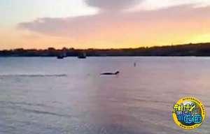美国尚普兰湖的钱普水怪