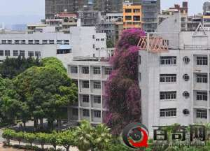 广西大学惊现20米鲜花瀑布奇景