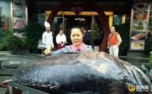 海南渔民捕获260多斤重石斑鱼 卖了26000元
