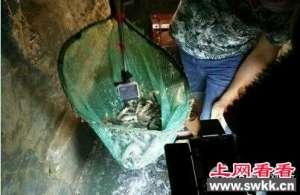 """重庆农户挖出鱼泉 """"喷鱼泉""""可为泉中奇观"""