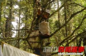 西藏树葬习俗
