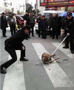 四川流浪狗被警察当街杖毙 做法引争议